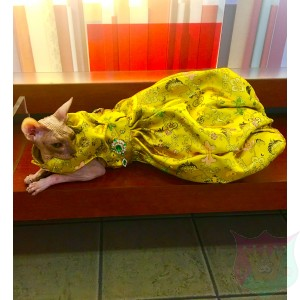 Bellissima Gown For A Pet By Joanna Aqua