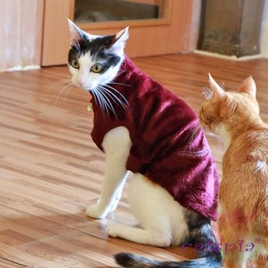 Castor cat sweater