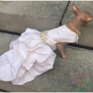 "Wedding Gown ""Envie"" For A Pet By Joanna Aqua"