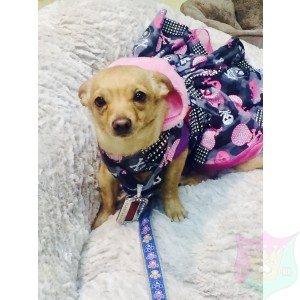 Pink Rockstar Ensemble For A Pet By Joanna Aqua
