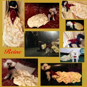 """Reine"" Gown For A Pet By Joanna Aqua with Swarowski Crystals"