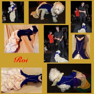 """Roi"" Couture For A Male Pet By Joanna Aqua with Swarowski Crystals"