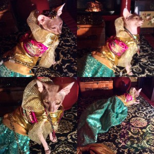 Sirene Couture Ensemble For A Pet By Joanna Aqua