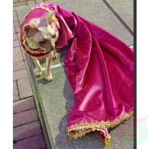 "Gown ""Magnifique"" For A Pet By Joanna Aqua"