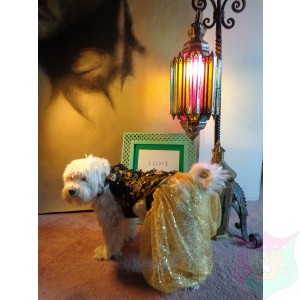 """Alan"" Couture Ensemble For A Male Pet By Joanna Aqua"
