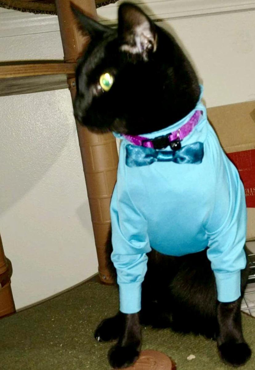 UV Medical Shirt for pets