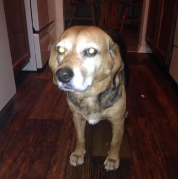 adopt | PET MONARCHY BLOG